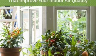 10 Houseplants for Air Quality You Should Know