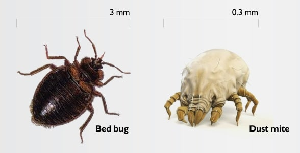 How To Get Rid Of Dust Mites Bed Bugs Know Treat And Prevent