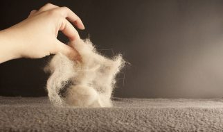 How To Clean Pet Hair From Your Home